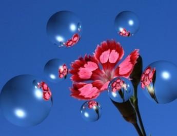 KEOPSMAN-cveće-Reginas-Raves-flowers-my-albums_large
