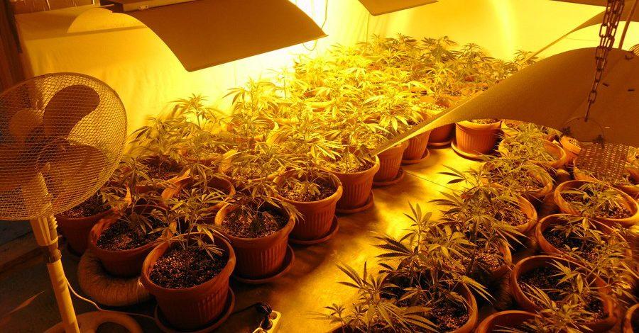 Mitrovačka policija otkrila laboratoriju za uzgoj marihuane, tri lica uhapšena FOTO